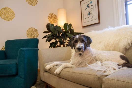 Therapy dog, Max, on couch
